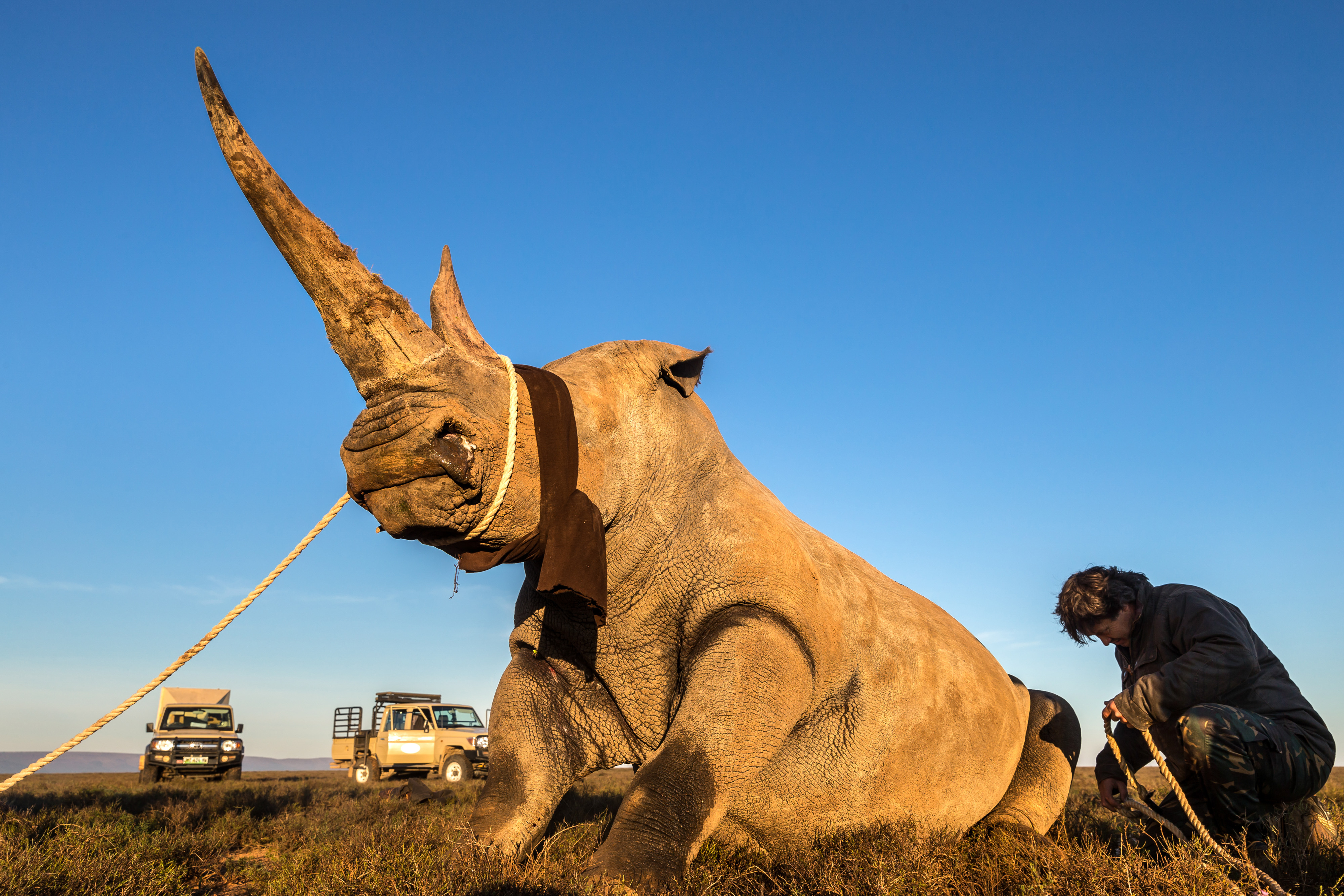 Inside the Deadly Rhino Horn Trade